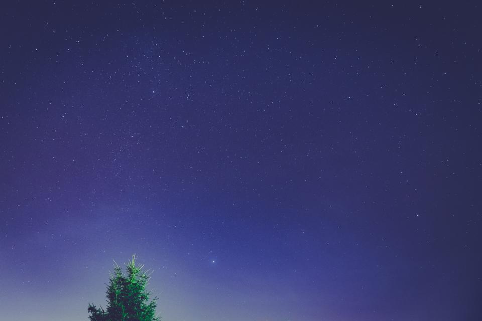 stars, sky, galaxy, night, dark, evening, space, astronomy, tree, purple, nature