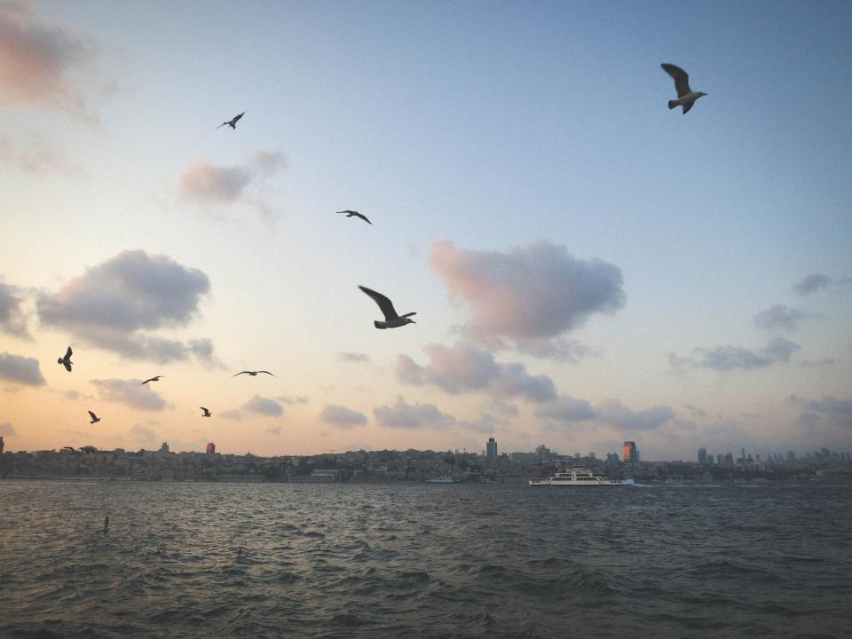 seagulls, birds, sky, clouds, water, boats, coast, city, skyline, view, buildings, Istanbul, Turkey