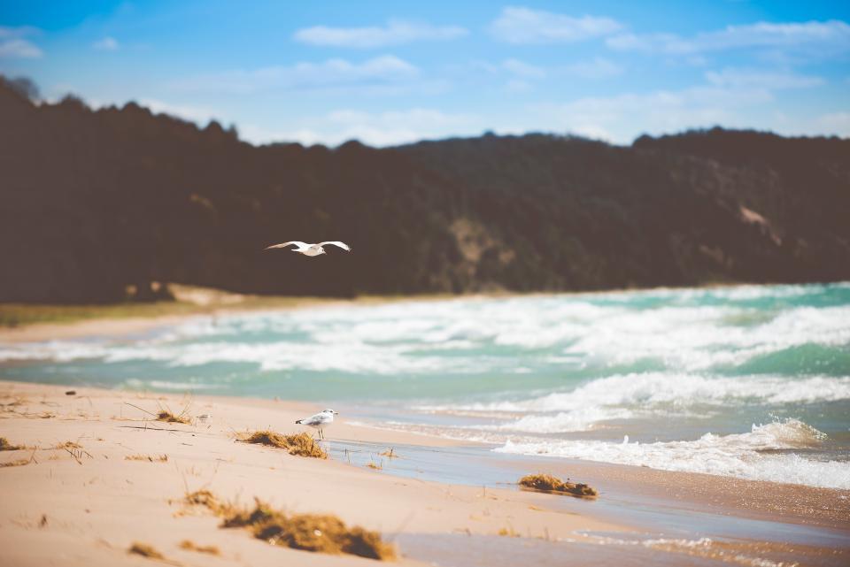 mountain, nature, sky, beach, sand, sea, water, ocean, waves, birds, fly, animal