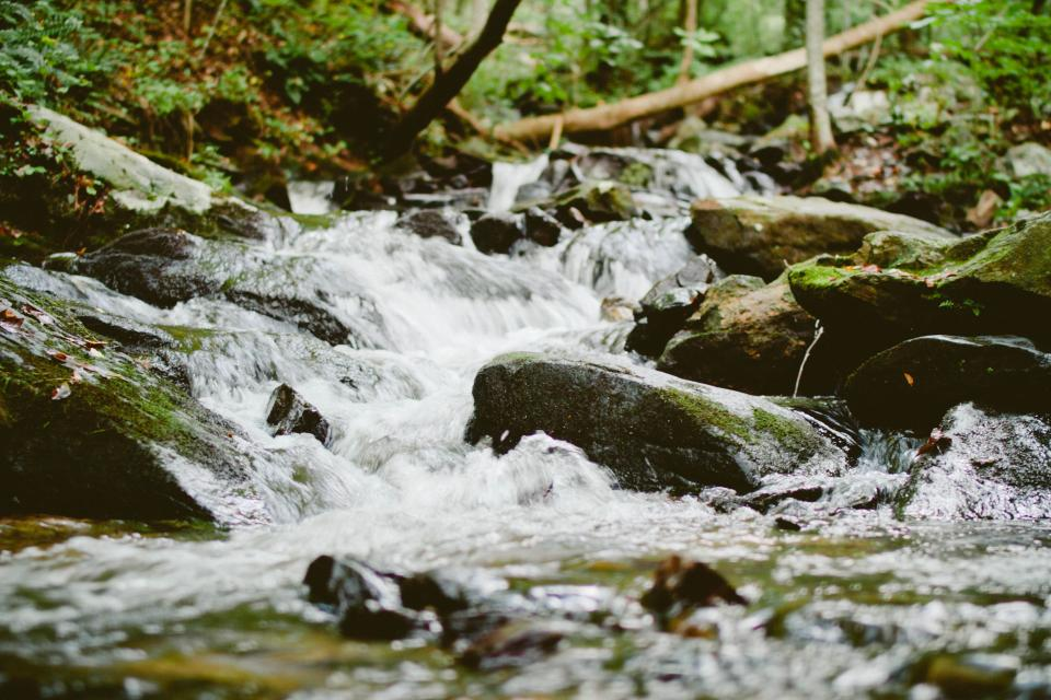 water, river, stream, water, woods, nature, rocks