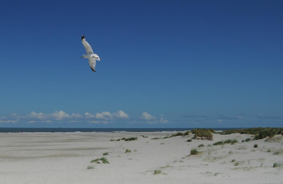 seagull, bird, wings, flying, beach, sand, water, sky