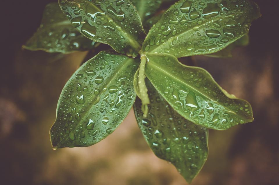 green, plants, leaves, nature, wet, raining, outdoors