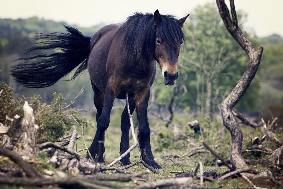 horse, mane, tail, animal, nature
