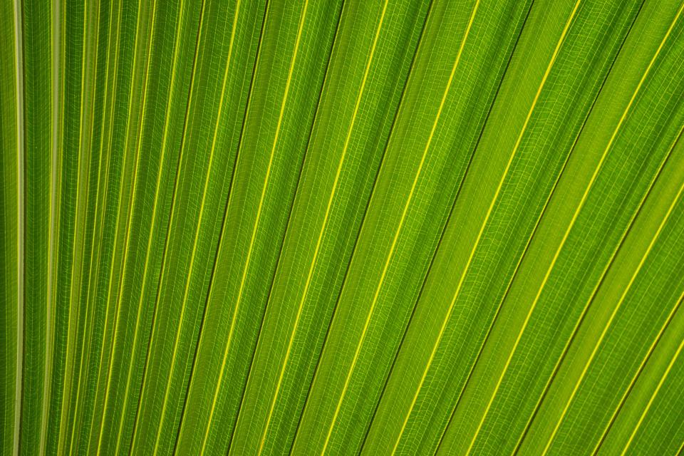 leaf, leaves, plants, green, nature, texture