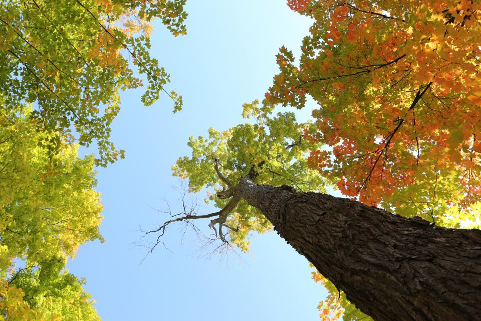 trees, leaves, autumn, colors, bark, branches, trunk, sky