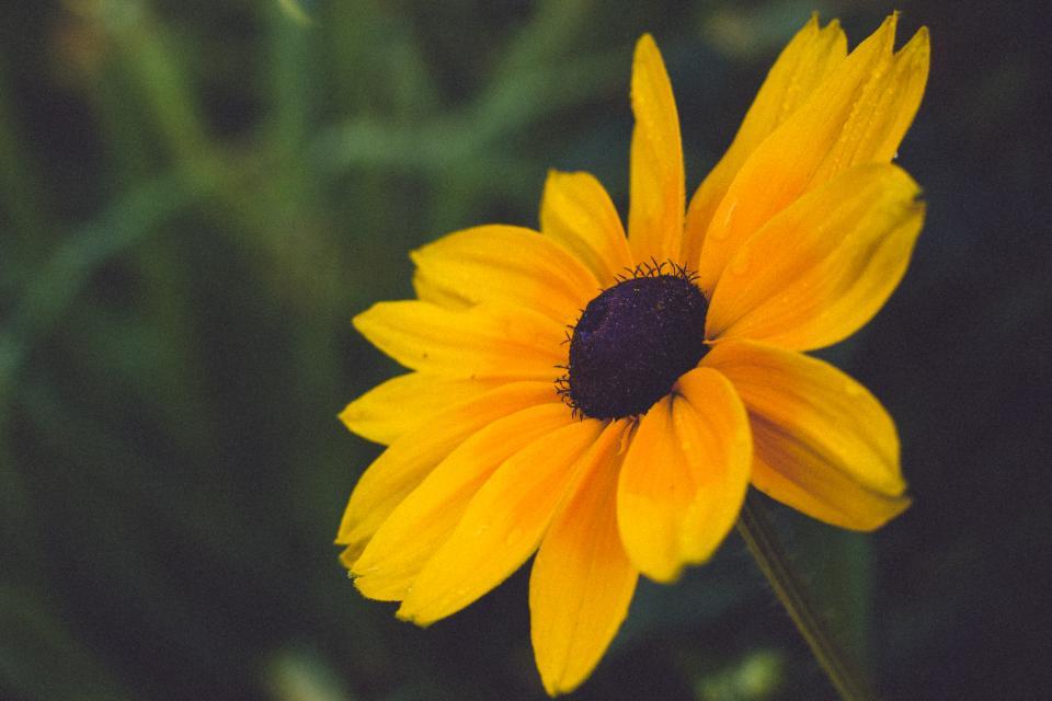yellow, flower, nature