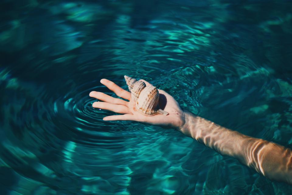 hand, seashell, water, ocean, sea, lake, arm, swimming