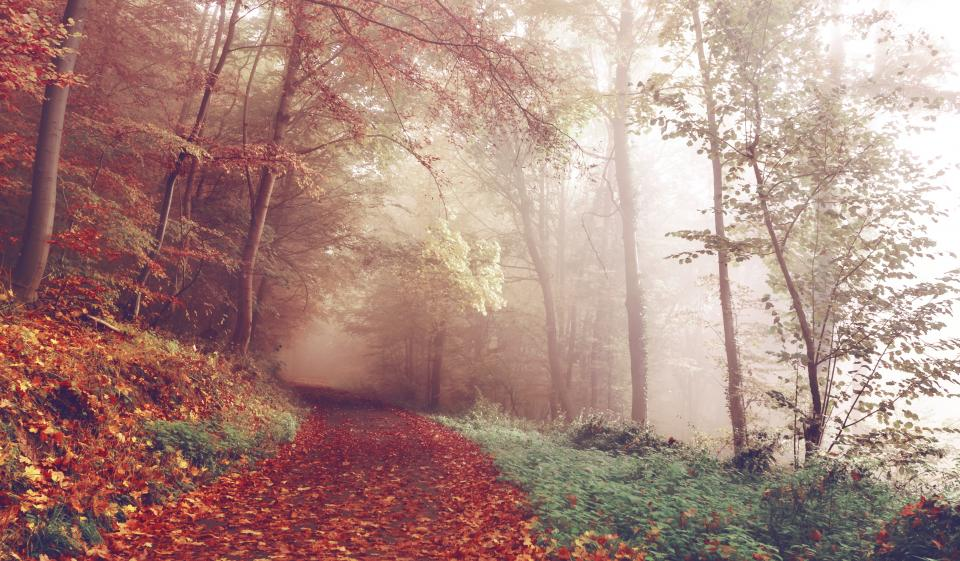 path, trail, forest, woods, trees, leaves, autumn, fall, fog, foggy, nature
