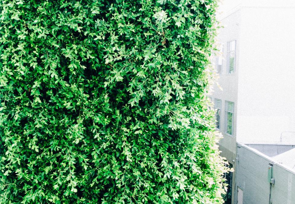 green, leaves, shrub