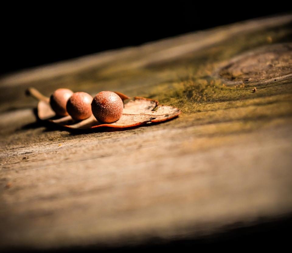 tree stump, bark, balls, leaf