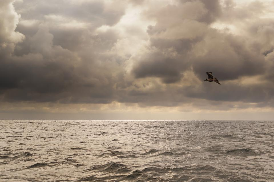ocean, sea, lake, water, birds, animals, sky, clouds, cloudy, storm, grey