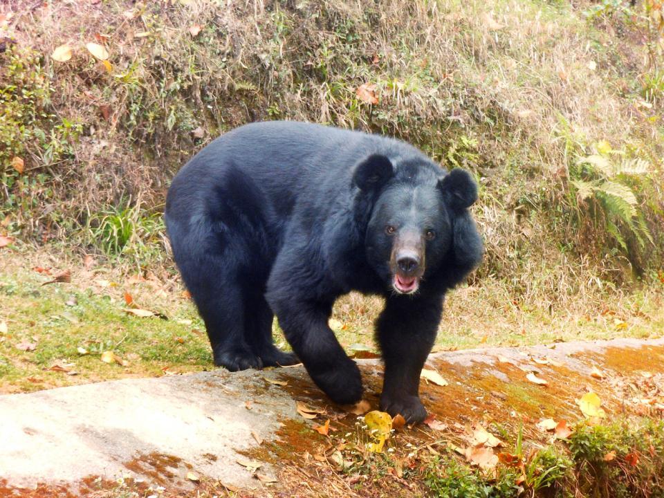 bear, animal, wild