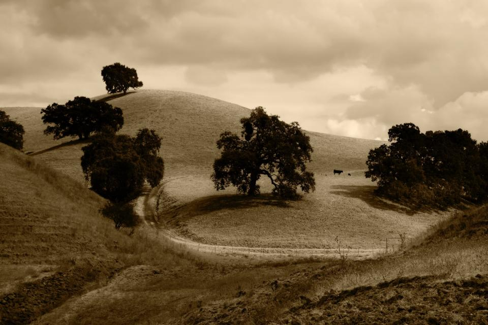 grey, clouds, fields, trees, animals, cows, cattle