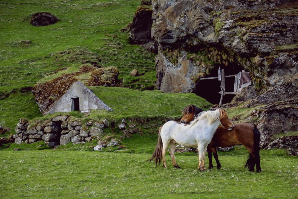 nature, grasslands, prairies, grass, concrete, wood, stone, houses, rocks, beautiful, animals, horses,