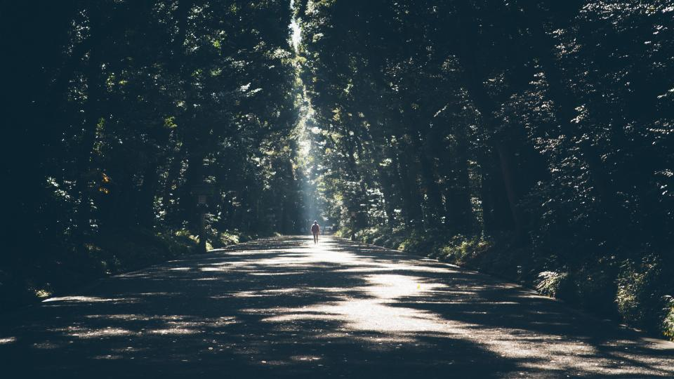 nature, landscape, forest, trees, leaves, path, street, road, man, woman, people, sunlight, shadow