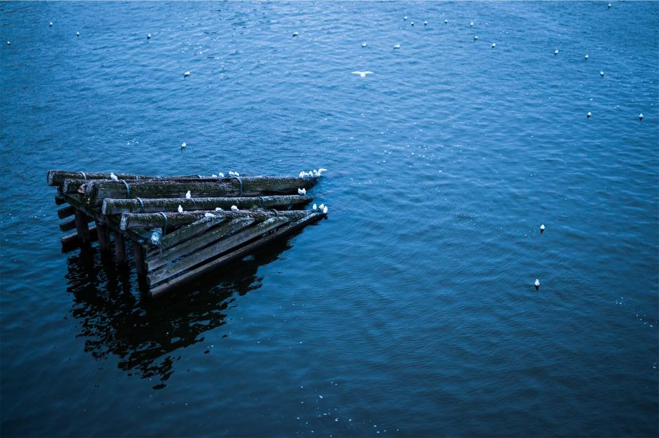 wood, logs, ramp, water, lake, blue, birds