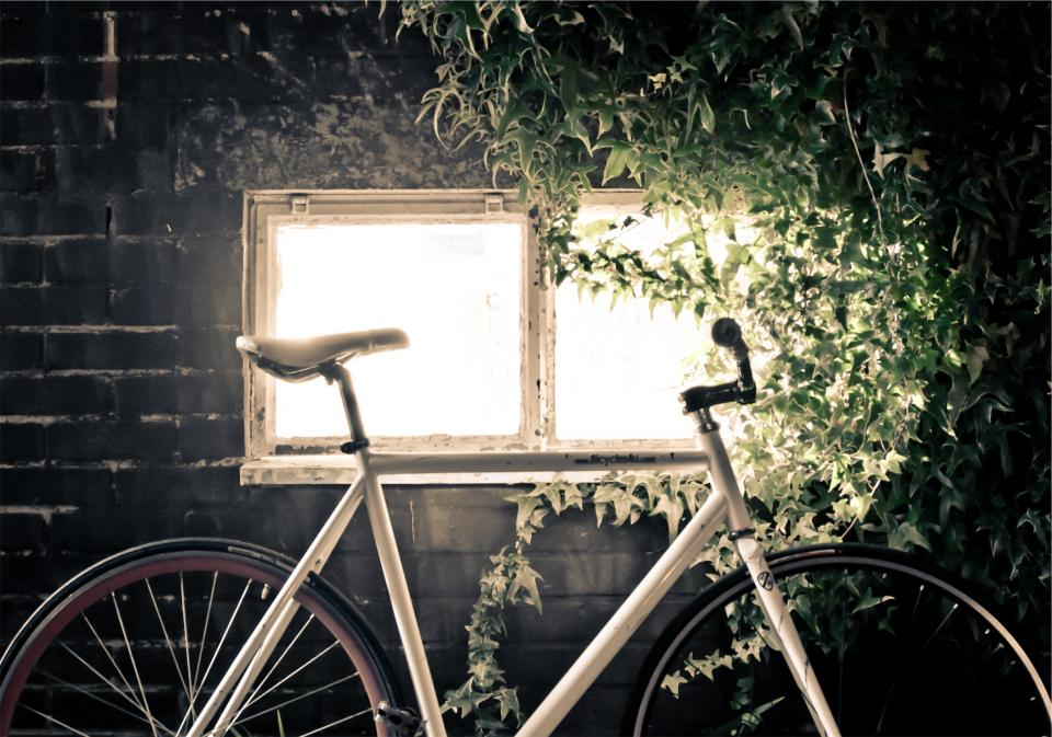 bike, bicycle, bricks, window, vines, leaves