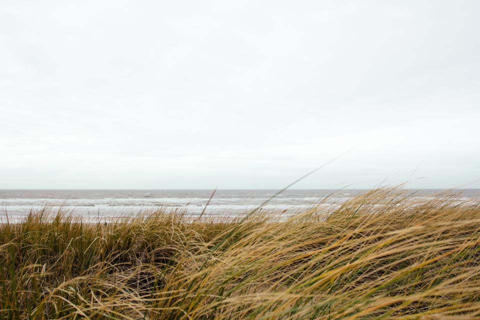 sky, clouds, ocean, waves, water, shore, grass, bushes, sand
