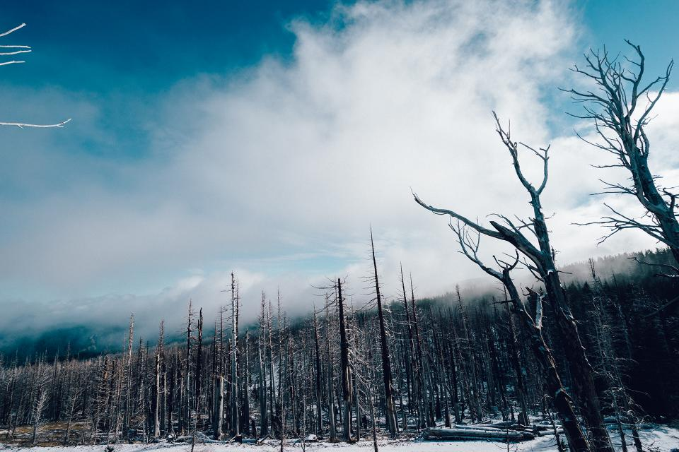 trees, forest, woods, winter, snow, cold, nature, sky, clouds