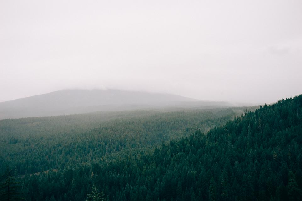 forest, fog, foggy, trees, green, fields, grey, sky
