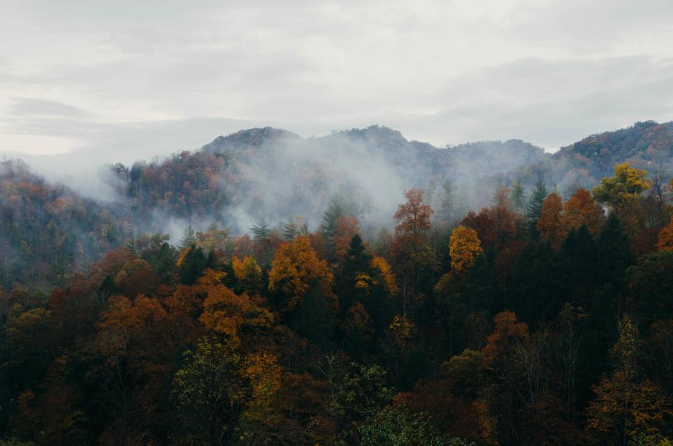 trees, forest, woods, fall, autumn, nature, fog, foggy, sky, landscape, mountains, clouds, cloudy