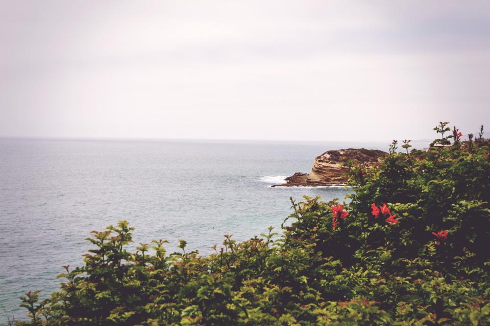sky, grey, water, beach, rocks, green, red, flowers, sea, ocean