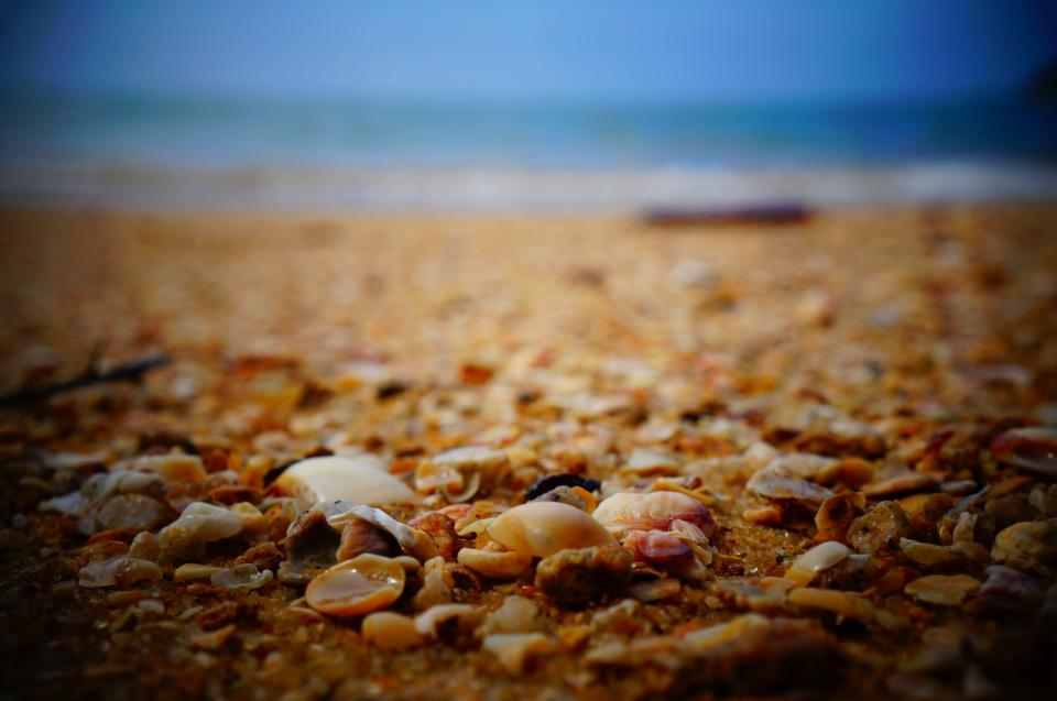 sea shells, shore, beach, sand, ocean