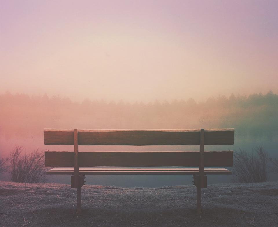 wood, bench, nature, outdoors, fog, foggy, trees, sunset, sky, nature