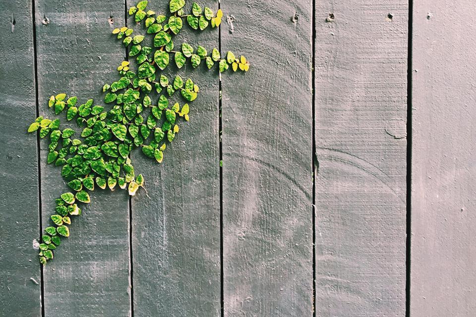 wood, fence, leaves, vines, texture