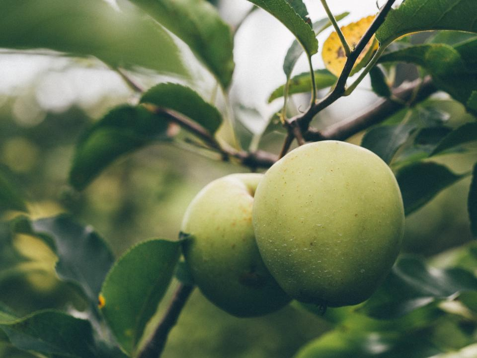 green, apples, fruits, food, trees, leaves, nature, healthy