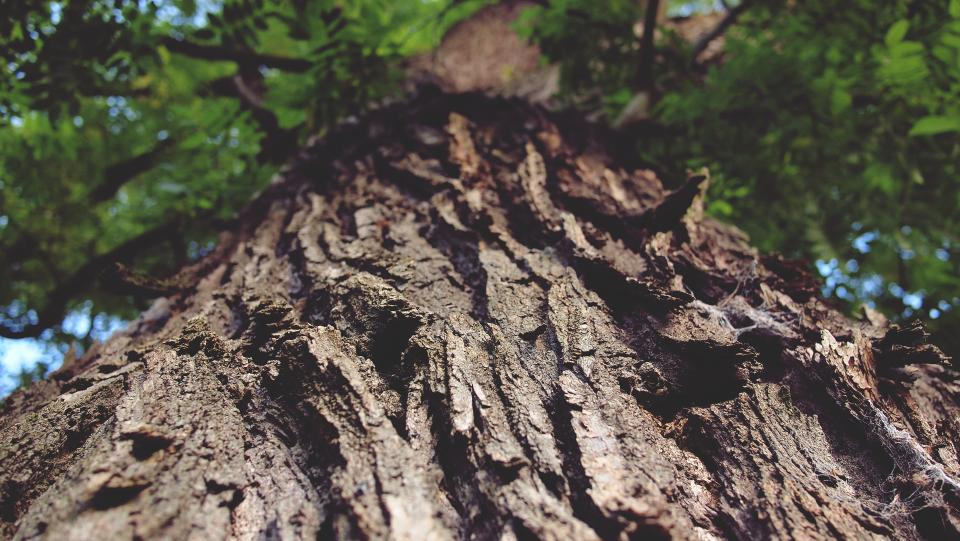 tree trunk, bark, nature