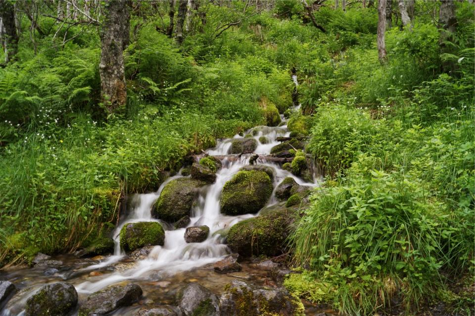 stream, water, rocks, moss, plants, trees, green, nature