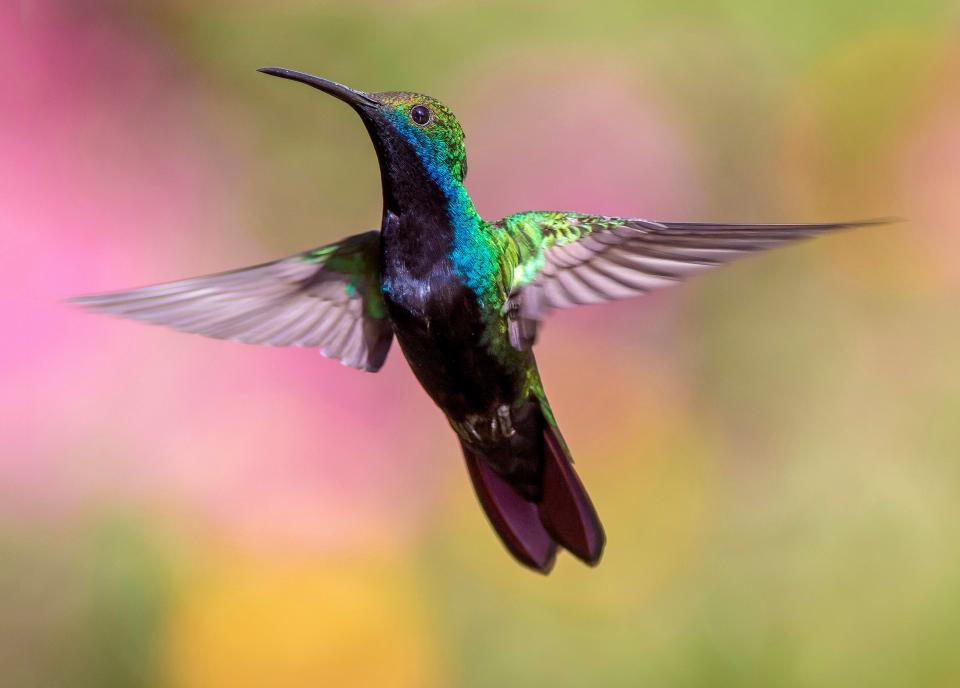 bird, animal, nature, fly, colorful, wings