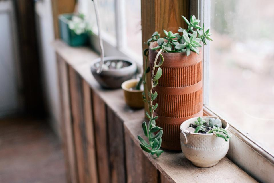 plants, pots, window, decor