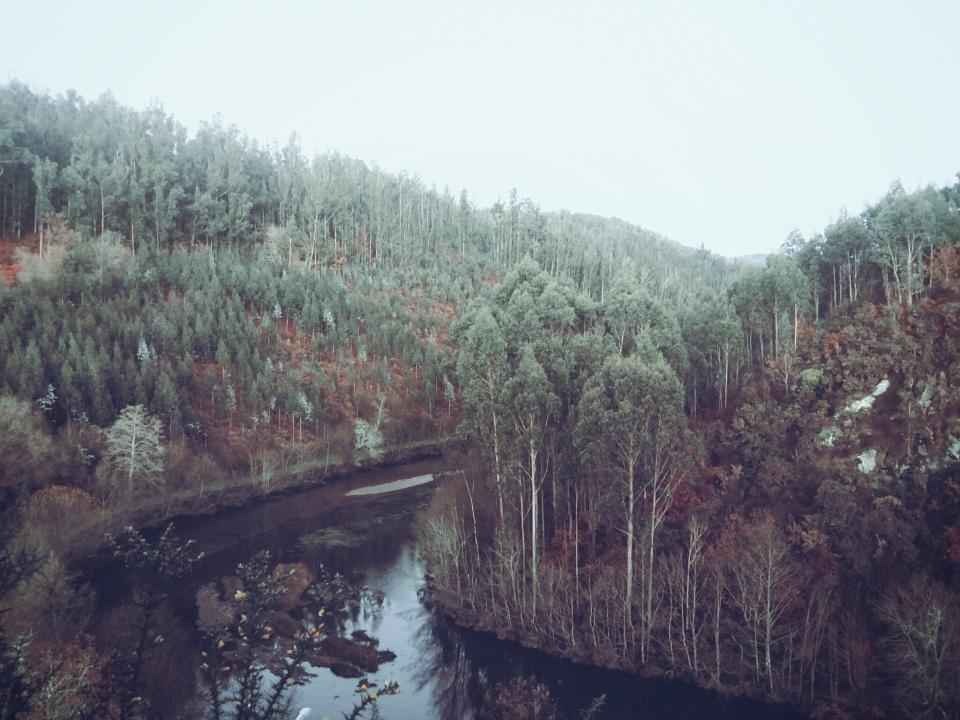 river, water, stream, trees, forest, woods, nature, outdoors, rural, landscape