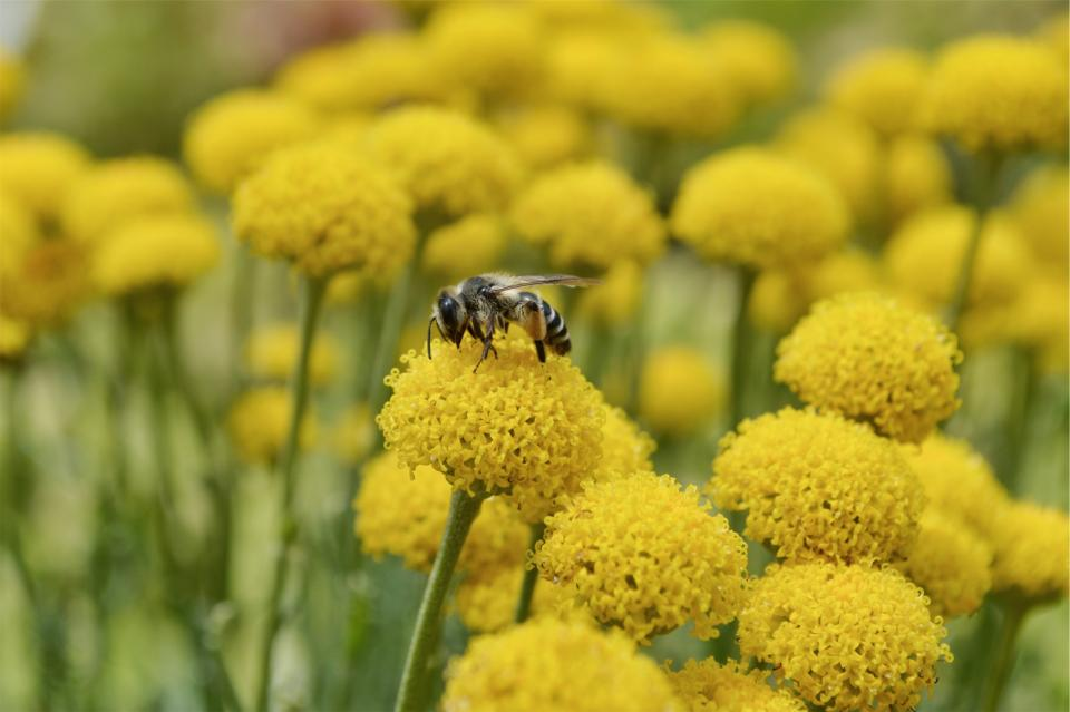 wasp, bee, insect, pollen