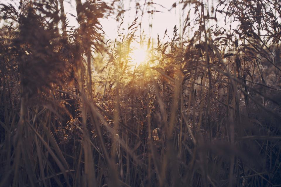 sunlight, bushes, nature, plants