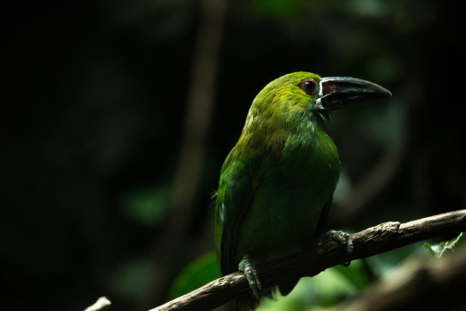 bird, green, animal, forest, tree, branch, nature