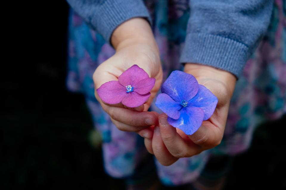 purple, blue, flowers, hands