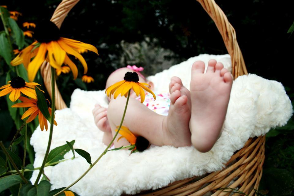 baby, feet, basket, flowers, family