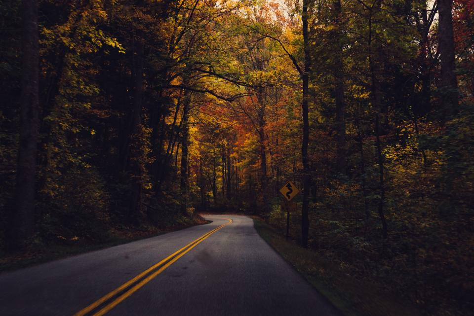 rural, winding, road, trees, forest, woods, fall, autumn, nature