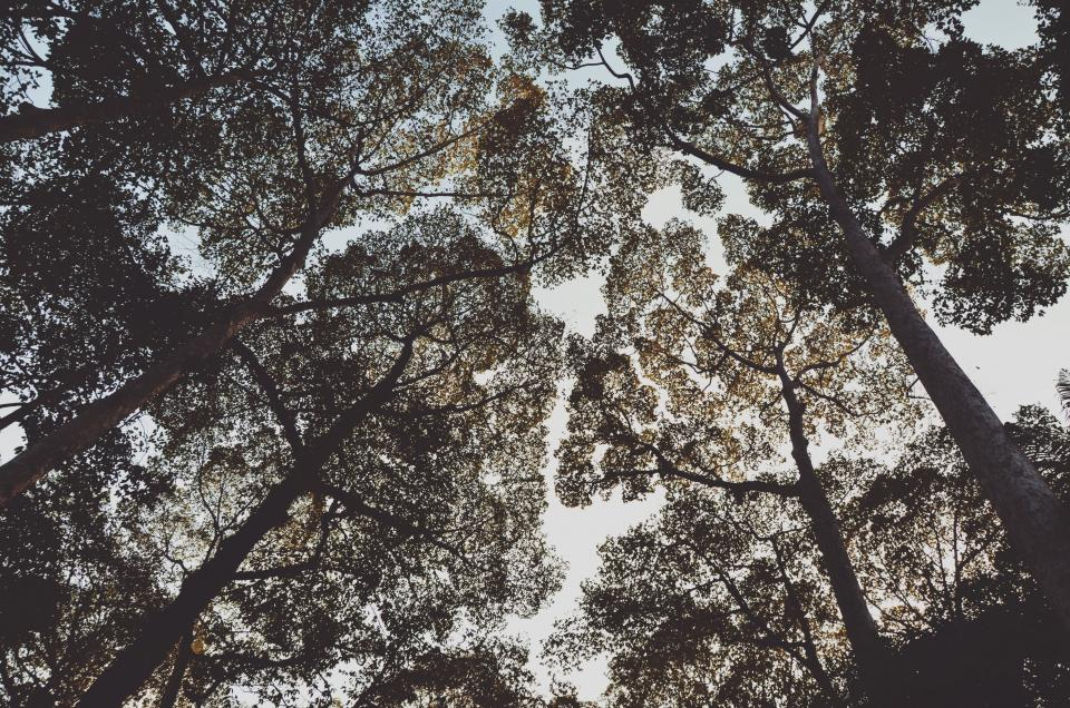 trees, leaves, sky, branches, nature