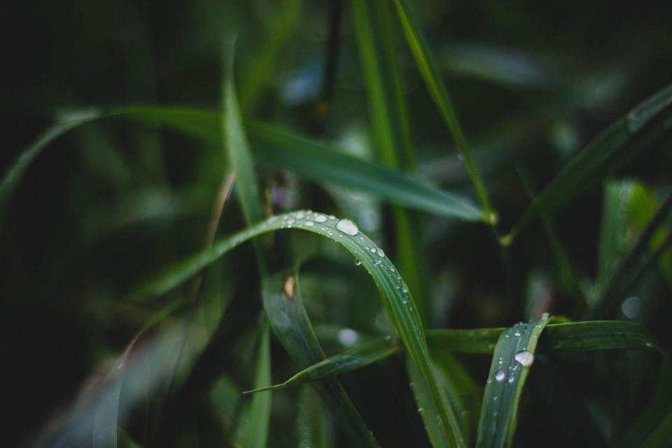 green, plants, nature, rain, drops