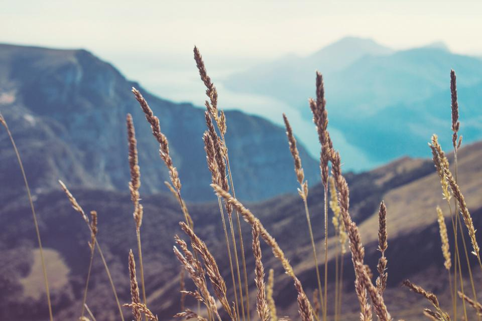 wild, plants, mountains, hills, valleys, nature, landscape