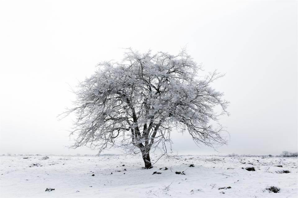 tree, winter, snow, ice, frozen, freezing, branches, cold