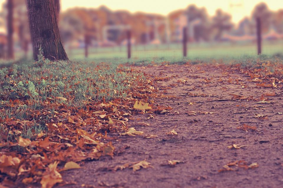 trees, fall, leaves, path, soil, dirt, grass, tree trunk, outdoors