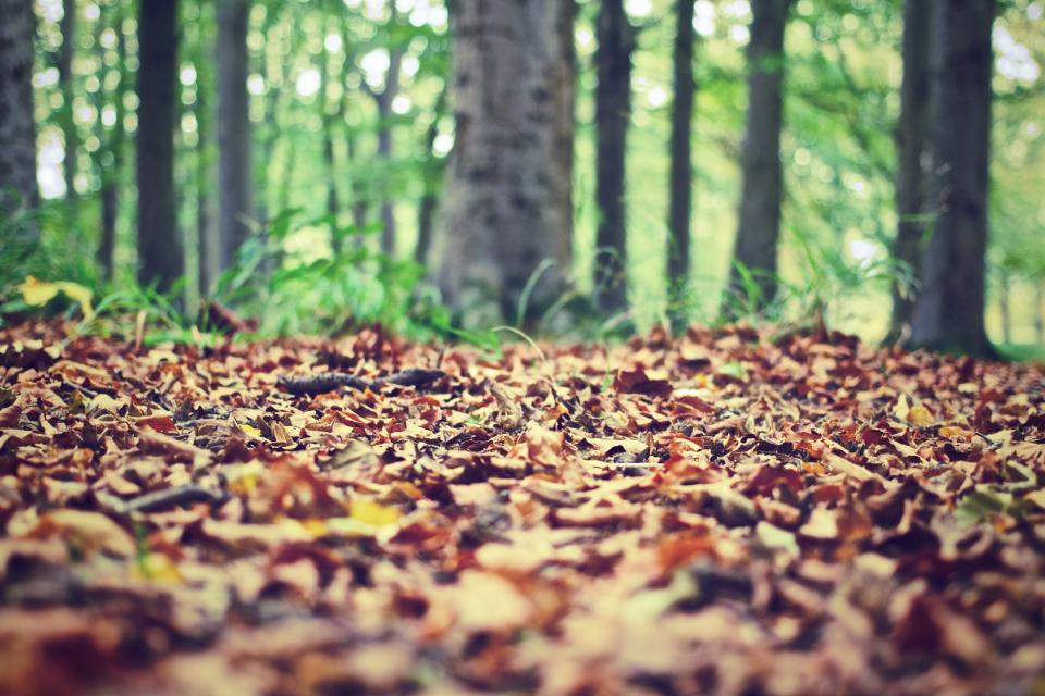 autumn, fall, leaves, trees, forest, woods, nature