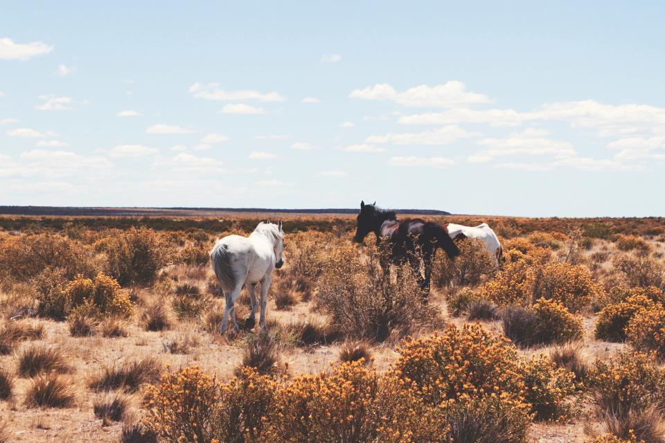 horses, graze, horse, field, grass, animals, nature, farm, wild, sunshine, summer, blue, sky, desert