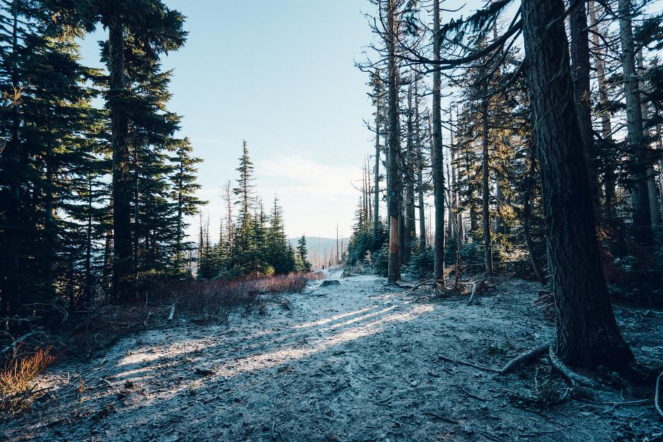 trees, forest, woods, snow, cold, sky, nature