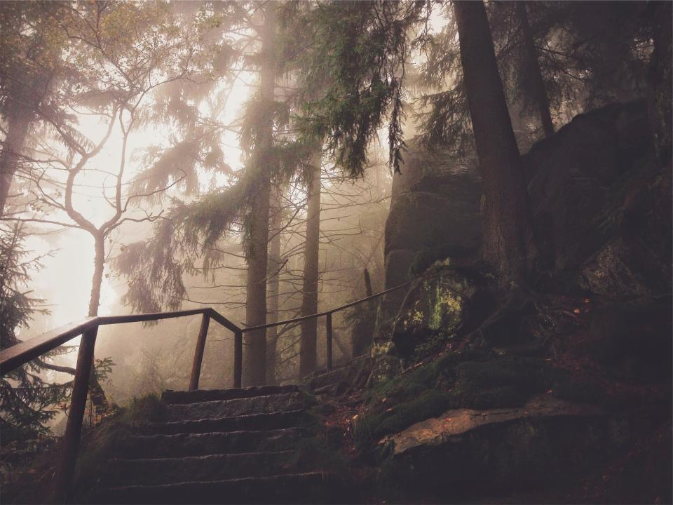 steps, trees, forest, woods, hiking, nature, rocks